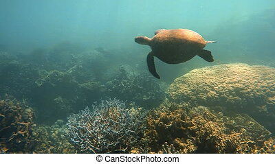 A sea turtle and coral reef