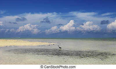 tropical beach - a seabird at tropical beach,crystal clear...