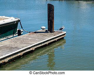 A Seagull at a Marina in San Francisco California USA