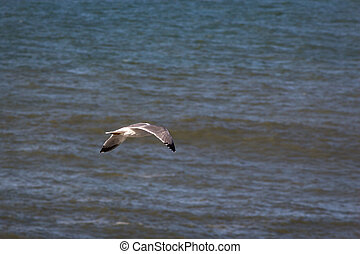 A seagull flying over the sea, Portugal