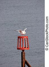 A seagull landing on a perch