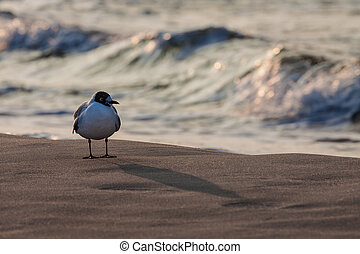 A seagull on shore of the Baltic Sea.