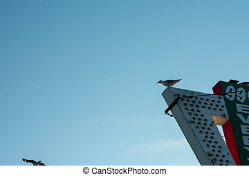 A Seagull Perched on the Top of an Old Marquee Sign