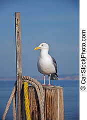 A seagull rests on a pole at the end of a pier