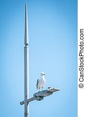 A Seagull Sitting On Top Of A Street Light With Spikey Lamp Post
