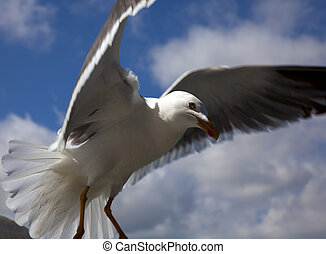 a seagull with blue sky