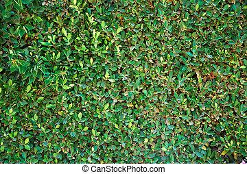a seamless green wall in the garden