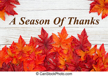 A season of Thanks greeting with red and orange fall leaves on weathered wood