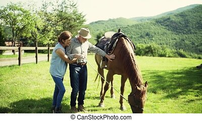 A senior couple holding a horse grazing on a pasture. - A...