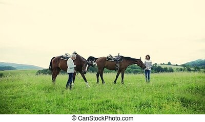 A senior couple holding horses grazing on a pasture. - A...