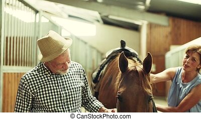 A senior couple petting a horse in a stable.