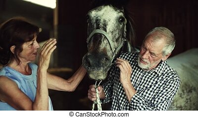 A senior couple petting a horse in a stable. - A joyful...