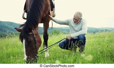 A senior man holding a horse grazing on a pasture. - A happy...