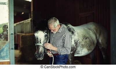 A senior man standing close to a horse in a stable, holding...