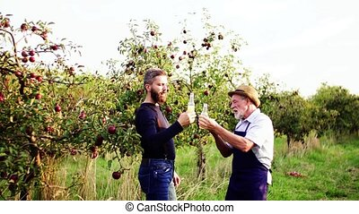 A senior man with adult son drinking cider in apple orchard...