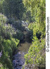 A Serene Brook