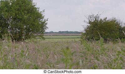 A depth-of-focus, extreme-long-shot of a series of fields covered in proliferating grass, separated by wild plants, bushes, and shrubberies.