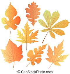 A set of autumn leaves. Element decor for the design of greetings to Teacher, Thanksgiving Day, Oktoberfest