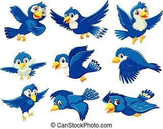 A set of blue bird
