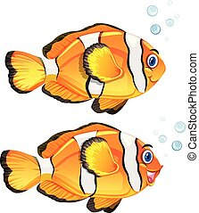 A set of clownfish on white background