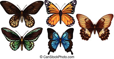 A Set of Colourful Butterfly