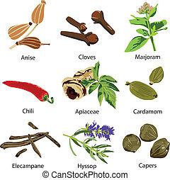 set of different spices - a set of different spices on a ...