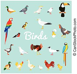 A set of domestic and wild birds in a flat style.