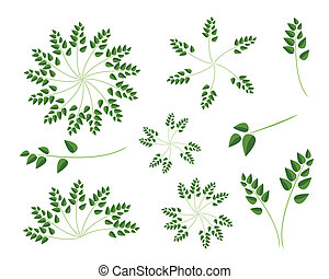A Set of Evergreen Leaves on White Background