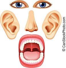 A Set of Facial Element
