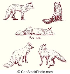 A set of fox doodles. Vector illustration on white isolated background