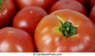 A set of fresh tomato fruit.