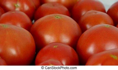 A set of fresh tomato fruit.