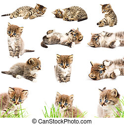 A set of funny cats.