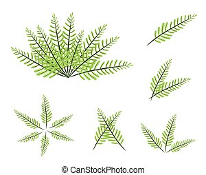 A Set of Green Fern on White Background - Ecological...