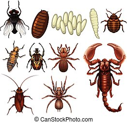 A Set of Insect