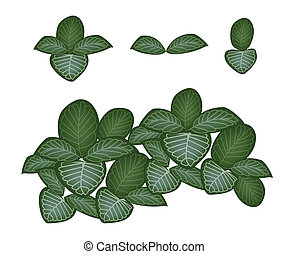 A Set of Nerve Plant on White Background - Ecological ...