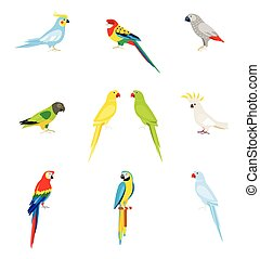 A set of parrots in a flat style.