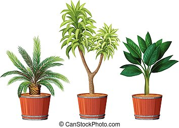 A Set of Plant in Pot