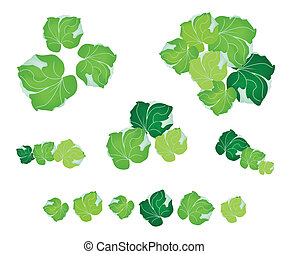 A Set of Polyscias Leaves on White Background