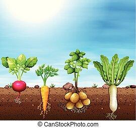 A set of root vegetable illustration