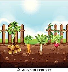 A set of root vegetables illustration