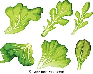 A set of salad leaf