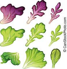 A Set of Salad Leaf