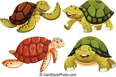 A set of sea turtle
