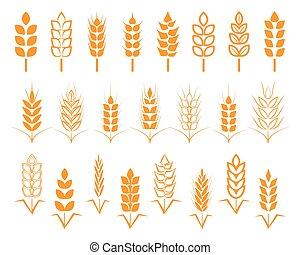A set of seeds of wheat, barley, rye ears. Vector illustration on white background izolirovaeerm.
