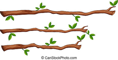 A set of tree branch