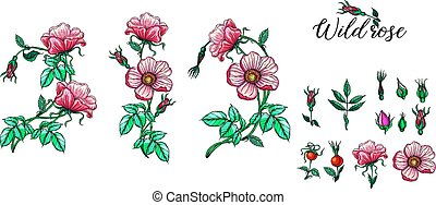 A set of vector flower compositions. Rose. Pink.