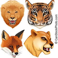A set of wild animal head
