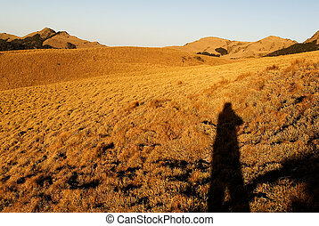 A shadow in the yellow grassland of high mountain.