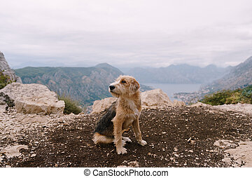 A shaggy dog on the ground with a small stone against the background of mountains, water and sky at the cliff, against the background of the Bay of Kotor in Montenegro.